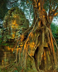 Stunning Nature Photography by Kenneth Parker-AmO Images-Ficus and East Entry Tower (Gopura) at Dawn, Ta Som, Angkor, Cambodia
