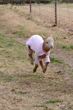 Zuri has liftoff! @ Farm Sanctuary.