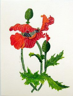 Red Poppy  original watercolor painting on paper.