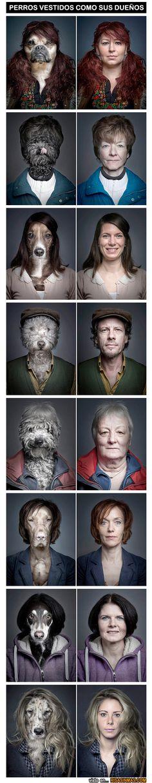Perros vestidos como sus dueños