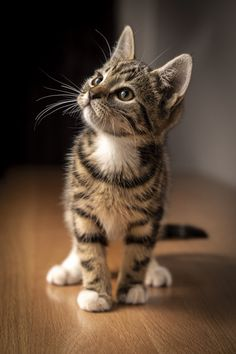 Cute Baby Cats, Cute Cats And Kittens, Cute Funny Animals, Cute Baby Animals, I Love Cats, Crazy Cats, Cute Dogs, Funny Kittens, Kittens Cutest Baby