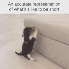 Funny Animal Jokes, Funny Dog Memes, Funny Animal Videos, Cute Funny Animals, Funny Animal Pictures, Animal Memes, Funny Cute, Funny Dogs, Cute Dogs