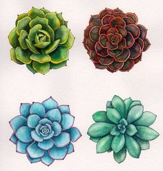 ideas for cactus succulent tattoo etsy Succulents Drawing, Watercolor Succulents, Succulents Art, Succulents Painting, Painting Flowers, Propagate Succulents, Succulent Cuttings, Colorful Succulents, Growing Succulents