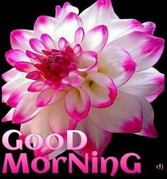 Let me know when it's safe to post pictures. Good Morning Friends Quotes, Good Morning My Friend, Morning Greetings Quotes, Happy Morning, Good Morning Picture, Good Morning Flowers, Good Morning Messages, Good Morning Good Night, Morning Pictures