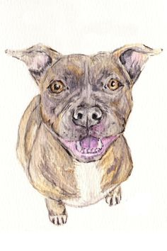 Hiii!! It's me, your beloved dog breed. I can't wait for you to bring me home. I promise I will be real quiet.