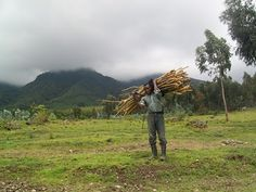 Farmer, Vulcanoes National Park, Ruanda