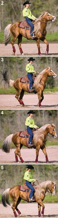 Softening at the Horse Bit: AnExercise for Your Speed Horse