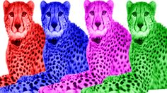 Cheetah Finger Family Songs | Finger Family Nursery Rhymes | Children Songs | Rhymes Song | For Kids https://youtu.be/25qwB2wfnPo