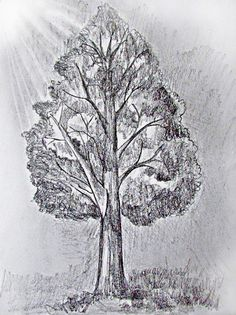 Learn how to draw a tree with these great step by step instructions for several different trees.