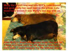 molly and lulu