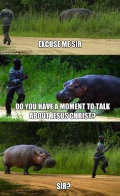 Haha funny Mormon meme with a hippo xD