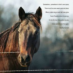 Quotes On Losing A Horse. QuotesGram by @quotesgram