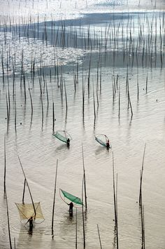Mudflats with bamboo sticks, Xiapu, Fujian, China 褔建 霞浦 北歧