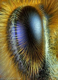 Eye of a honeybee photography eye nature cool amazing bee honeybee. So amazing. To quote Mark Wahlberg: No body cares why the bees are dying?