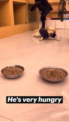 Cute Baby Dogs, Cute Funny Baby Videos, Cute Funny Babies, Cute Animal Videos, Cute Dogs And Puppies, Funny Animal Videos, Funny Animal Pictures, Funny Corgi Pictures, Funny Puppies