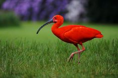 All You Need to Know About a Bird with a Long Beak