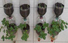 Pet Şişeden Saksı Nasıl Yapılır? ,  #çiçeksulayansaksı #nelerdensaksıyapılır #petşişesaksıyapımı , Dar alanları olanlar için güzel bir geri dönüşüm fikirleri. Pet şişeden saksı yapımı ile evde sebze yetiştirebilirsiniz. Renk renk çiçe... https://videohanim.com/pet-siseden-saksi-nasil-yapilir-video/
