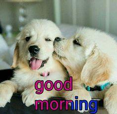 good morning no mani Good Morning Animals, Good Morning Snoopy, Good Morning Wishes Friends, Sunday Morning Quotes, Cute Good Morning Images, Good Morning Love Messages, Good Morning Happy Sunday, Good Morning Funny, Good Morning Picture