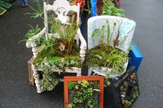 Living Chairs sold at the Snohomish County Master Gardener Plant sale 2012