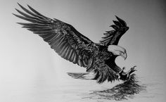 Bald Eagle~ Flying~ Bird of Prey~ Limited Edition Print Signed & Numbered by Artist Sheri-Lynn Marean Bird Of Prey Tattoo, Hawk Tattoo, 4 Tattoo, Angel Tattoo Designs, Dragon Tattoo Designs, Tribal Tattoo Designs, Chest Tattoo Stars, Chest Piece Tattoos, Phoenix Tattoo Design