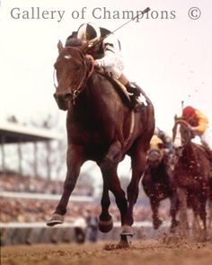 1975 Kentucky Derby Winning Race Horse Foolish Pleasure