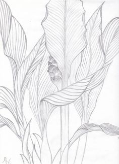 Flower Drawing Visualization Basics Tropical Leaves Contour Drawing from life Leaf Drawing, Plant Drawing, Painting & Drawing, Cross Contour Line Drawing, Basic Drawing, Tropical Art, Tropical Leaves, Botanical Art, Botanical Illustration