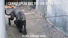 Petition · Pyeongchang 2018 - South Korean Gold Medalist Yuna Kim To Join The Fight Against Dog Meat · Change.org