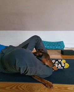 Yoga Dog Mann und Hund beim Yoga.  happy me. .... Yoga Dog, Dogs, Men And Dogs, Pet Dogs, Doggies