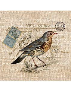 Blue bird on branch Paris Carte Postale ephemera digital download image transfer to fabric paper pillows burlap decoupage