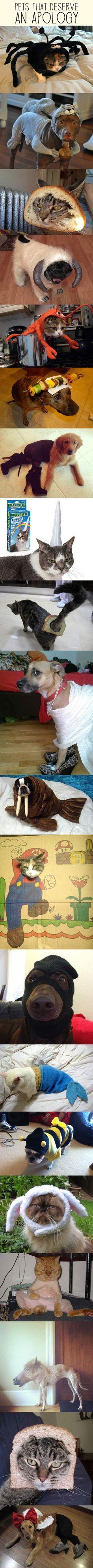 I'm so, so sorry. lol... #animalcostumes
