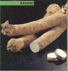 Epicuro e le Erbe: SALSA DI RAFANO
