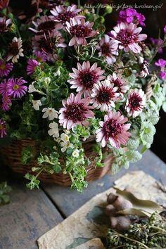 寄せ植え|フローラのガーデニング・園芸作業日記 -2ページ目