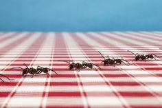 Vous voulez éviter de polluer votre jardin ou votre maison avec des insecticides ? Voici cinq solutions maison pour se débarrasser des petites bêtes intrus