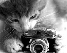 >Snap! Capture The Moments<
