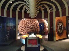 Health Museum of Houston #museumdistrict #houston #followthelion