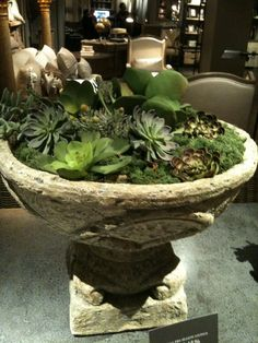 I was in Restoration Hardware just last week when I spied these glorious succulent urns