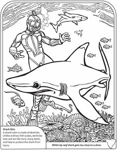 free kids coloring pages  cards great white shark  kids