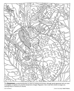 Life is about using the whole box of crayons. Go WILD with this free printable from our Hidden Predators Coloring Book! www.mindware.com
