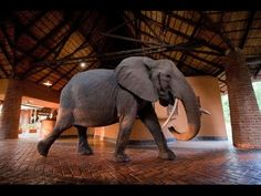 Now this is my kinda hotel!! Zambia here I come!! You're going to be in complete awe when you watch this. #elephants #DoGood365