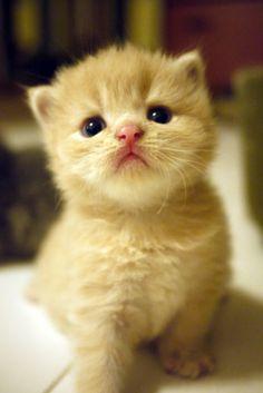 Little cutie love