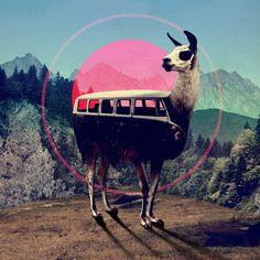 Llama Framed Art Print by Ali GULEC | Society6