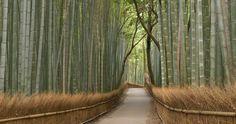 Bamboo grove at the Portland Japanese Garden