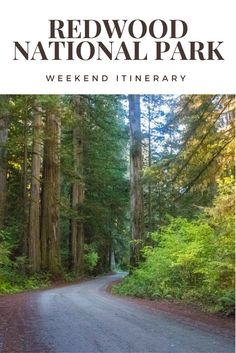 redwood national park travel california camping national park united states outdoors hiking
