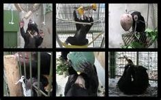bear enrichment - Bing Images