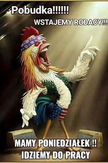 Weekend Humor, Good Morning Everyone, Orangutan, Motto, Album, Funny, Creative, Animals, Pictures