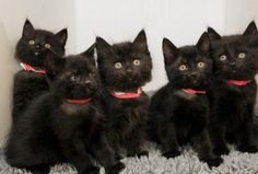 black kittens ~ so much GOOD LUCK! This reminds me of my crew I miss those black critters