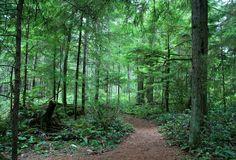 deciduous forest.jpg 800×543 pixels