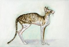 A Little Cornish Rex Cat Art Print by AlmostAnAngel66 on Etsy                                                                                                                                                                                 More