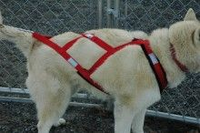 Dog Harness - Regular X- Back Fleece.  I think pulling would be a great activity for Bronx!
