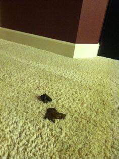 Dog Diarrhea In House At Night
